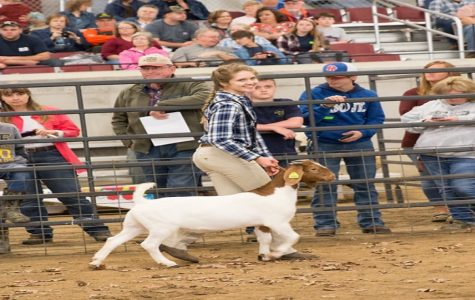 Students participate in Pittsylvania-Caswell Youth Junior Livestock Show and Sale