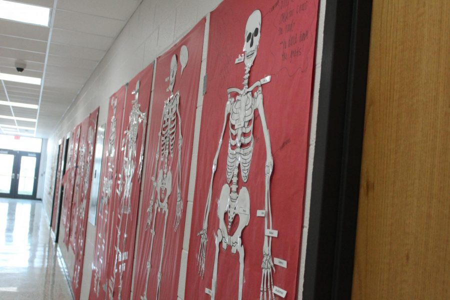 Mrs. Elizabeth Kirby's Anatomy class learned about human skeletons and skin cells by making physical representations that now hang in the hallway.